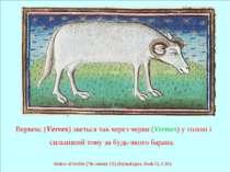 Вервекс (Vervex) зветься так через черви (Vermes) у голові і сильніший тому з...