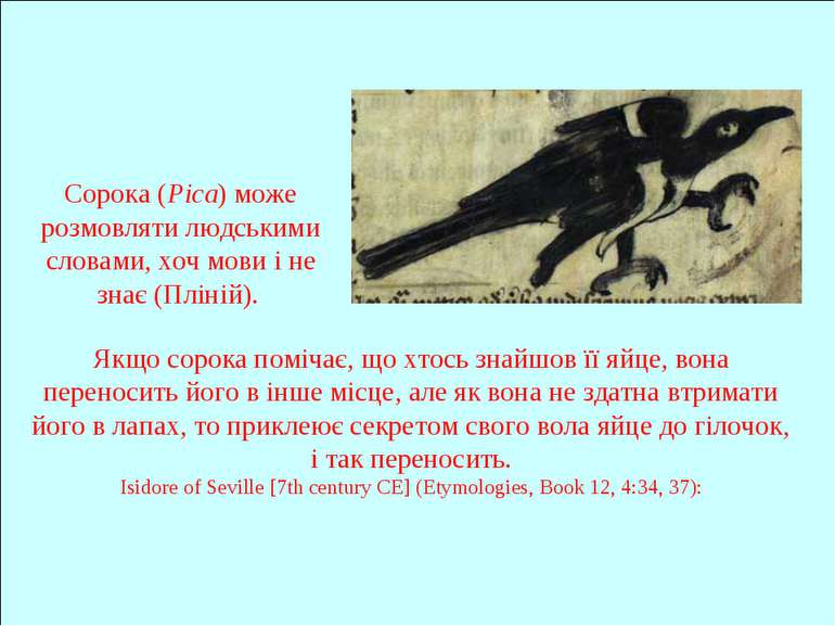 Сорока (Pica) може розмовляти людськими словами, хоч мови і не знає (Пліній)....