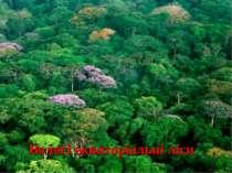 Вологі екваторіальні ліси
