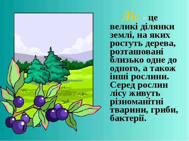 Ліс - це великі ділянки землі, на яких ростуть дерева, розташовані близько од...