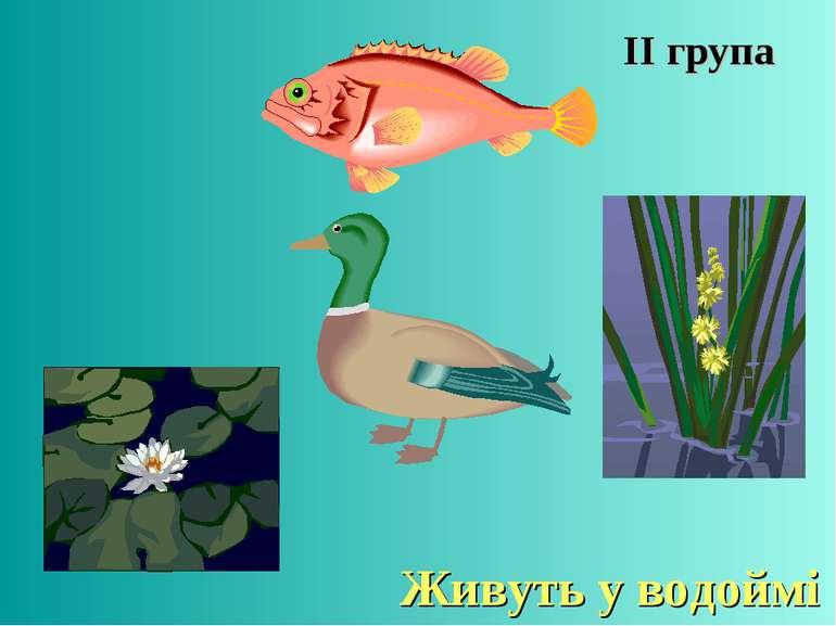 ІІ група Живуть у водоймі