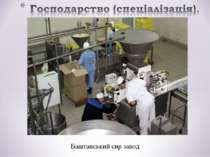 Баштанський сир завод
