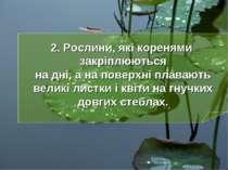 2. Рослини, які коренями закріплюються на дні, а на поверхні плавають великі ...