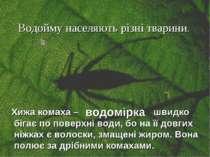 Водойму населяють різні тварини. Хижа комаха – швидко бігає по поверхні води,...
