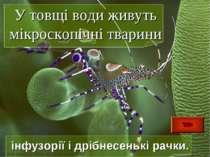 У товщі води живуть мікроскопічні тварини інфузорії і дрібнесенькі рачки.