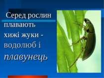 Серед рослин плавають хижі жуки - водолюб і плавунець
