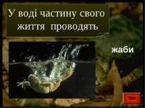 жаби У воді частину свого життя проводять
