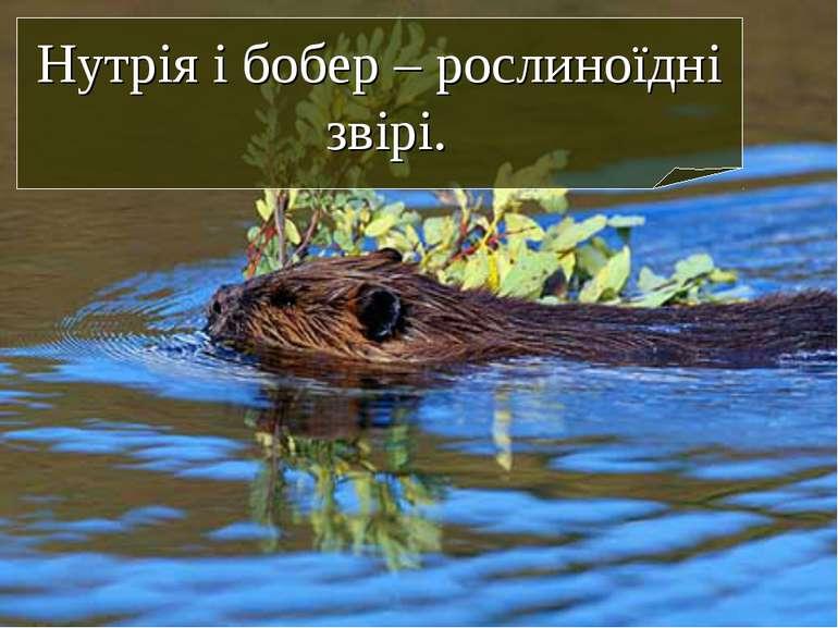 Нутрія і бобер – рослиноїдні звірі.