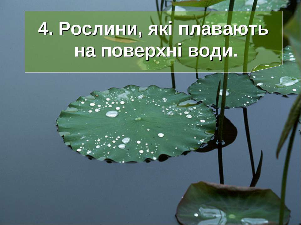 4. Рослини, які плавають на поверхні води.
