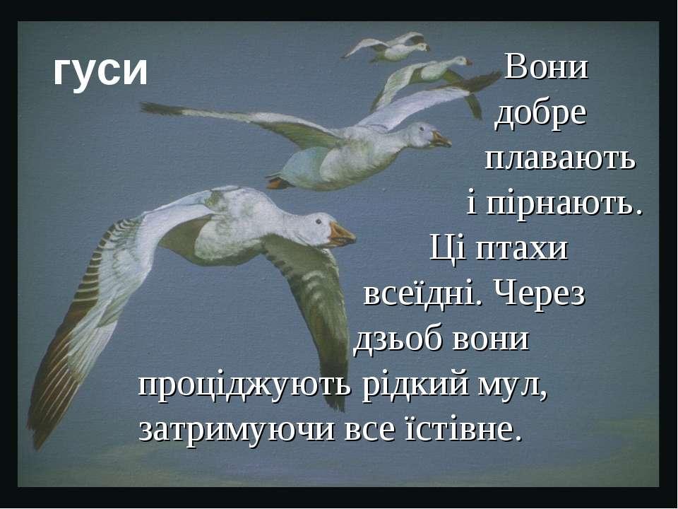 Вони добре плавають і пірнають. Ці птахи всеїдні. Через дзьоб вони проціджуют...