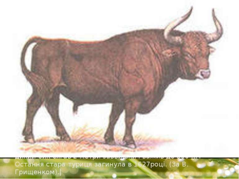 |Цікаво, що диких коней ( тарпанів) зустрічали на півдні сучасної Київщини. Т...