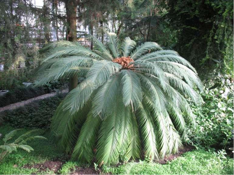 |Ботанічний сад імені О. Фоміна цікавий оранжереями тропічних рослин, де рост...