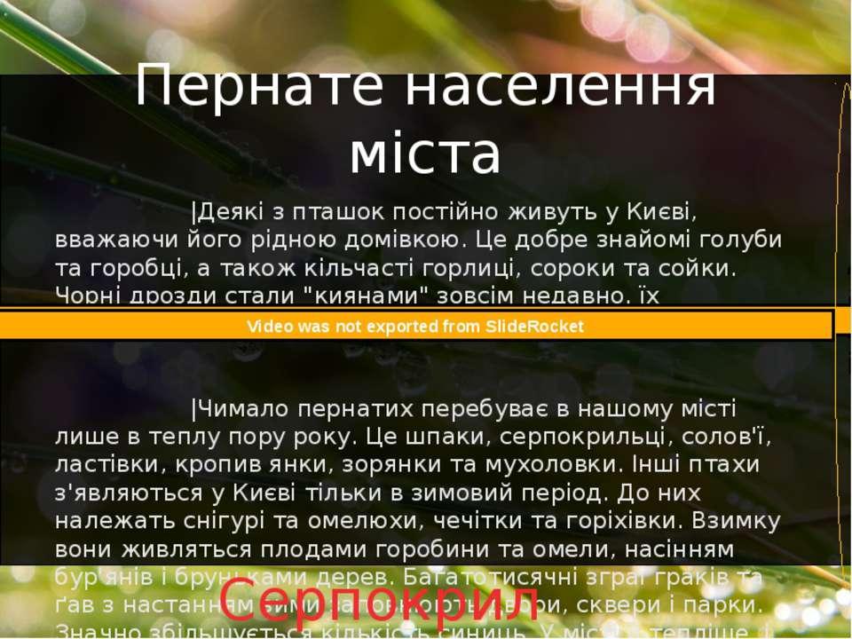 |Деякі з пташок постійно живуть у Києві, вважаючи його рідною домівкою. Це до...