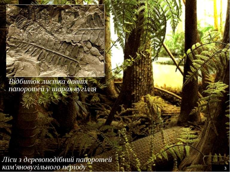 Ліси з деревоподібний папоротей кам'яновугільного періоду 3 Відбиток листка д...