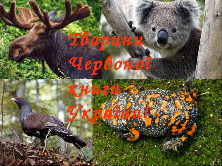 Тварини Червоної книги України!