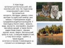 У лісах іноді зустрічаєтьсябенгальський, або королівський,тигр. На південно...