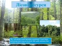 Лісові ресурси Ліси займають понад третину території. Серед дерев найпоширені...