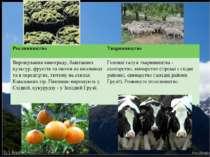 Рослинництво Тваринництво Вирощування винограду, баштанних культур, фруктів т...