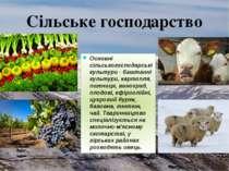Основні сільськогосподарські культури - баштанні культури, картопля, пшениця,...