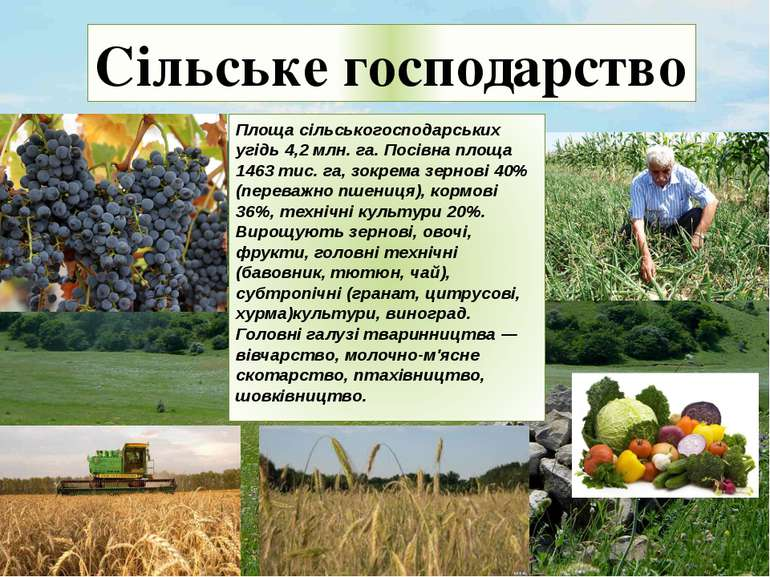 Сільське господарство Площа сільськогосподарських угідь 4,2 млн. га. Посівна ...