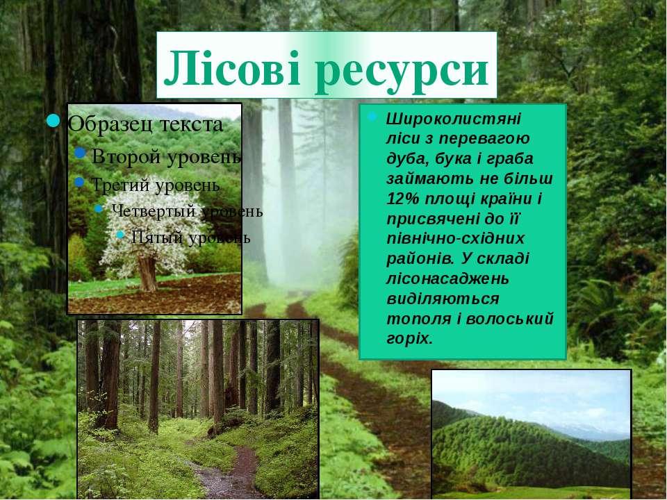 Лісові ресурси Широколистяні ліси з перевагою дуба, бука і граба займають не ...