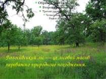 Голосіївський ліс — це лісовий масив переважно природного походження.