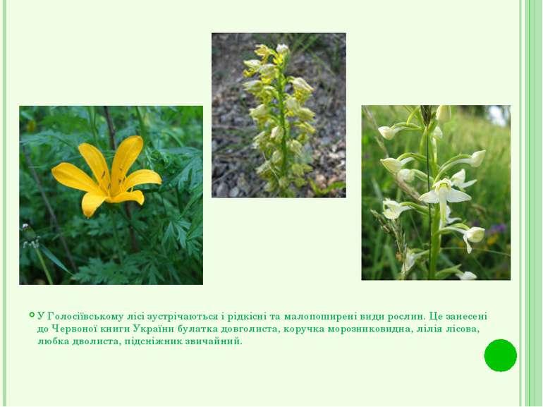 У Голосіївському лісі зустрічаються і рідкісні та малопоширені види рослин. Ц...