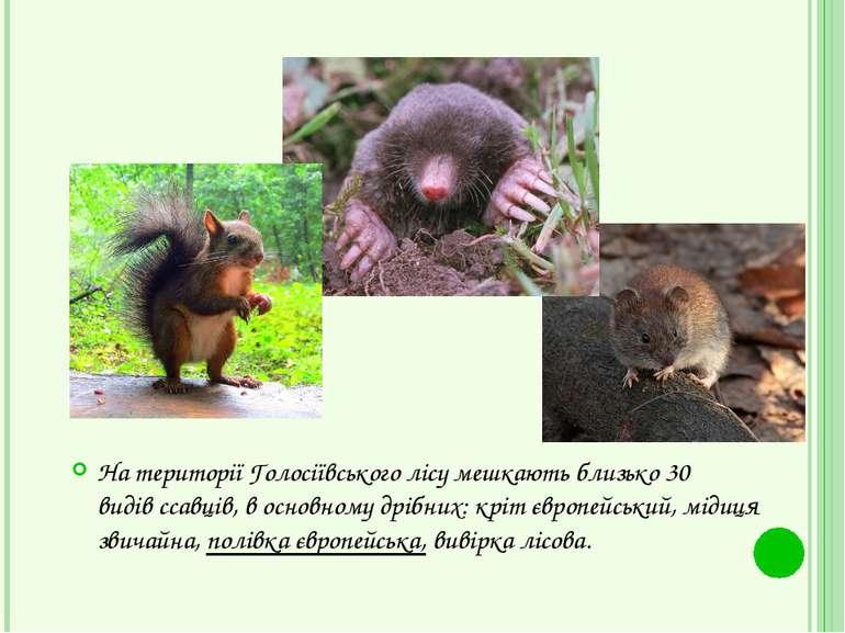 На території Голосіївського лісу мешкають близько 30 видівссавців, в основно...