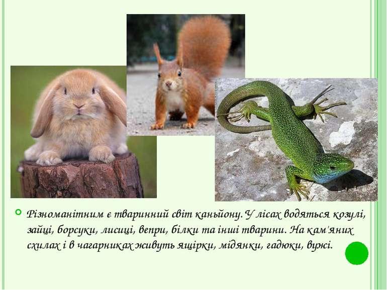 Різноманітним є тваринний світ каньйону. У лісах водяться козулі, зайці, борс...