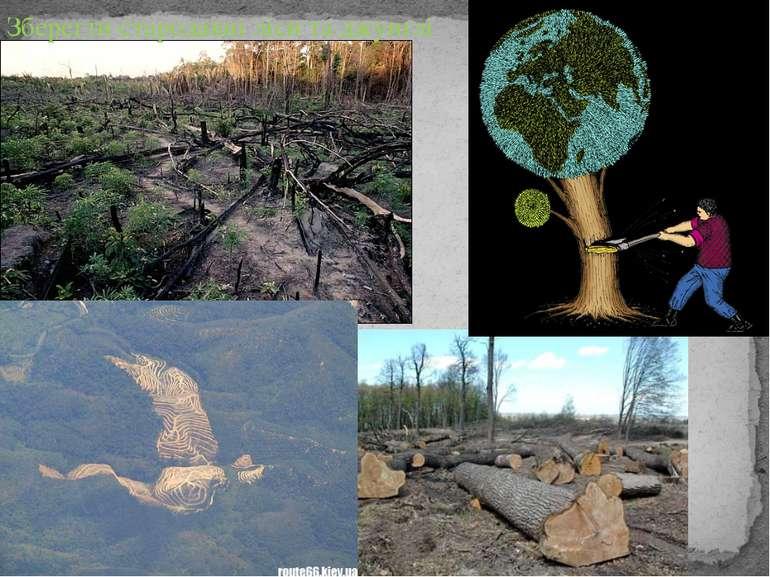 Зберегти стародавні ліси та джунґлі