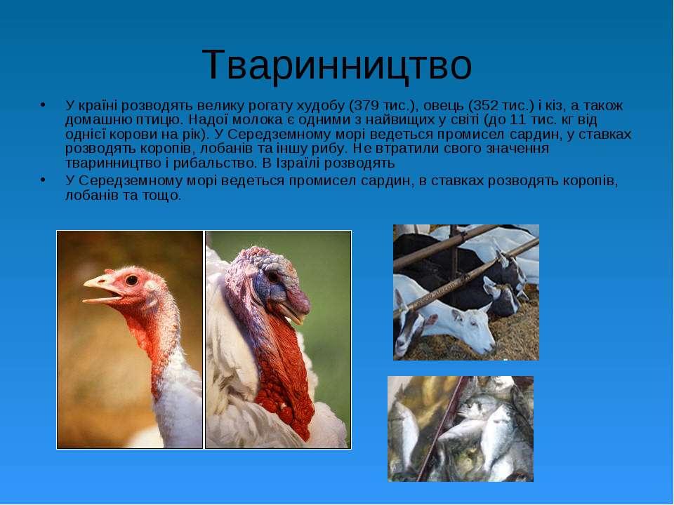 Тваринництво У країні розводять велику рогату худобу (379 тис.), овець (352 т...