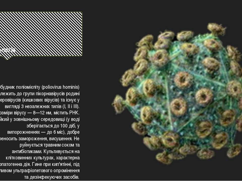 Етіологія Збудник поліомієліту (poliovirus hominis) належить до групи пікорна...