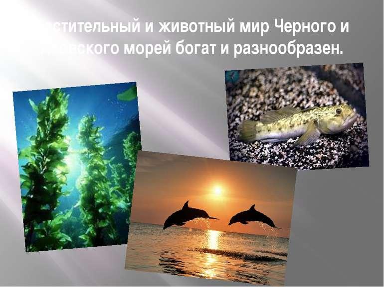 Растительный и животный мир Черного и Азовского морей богат и разнообразен.