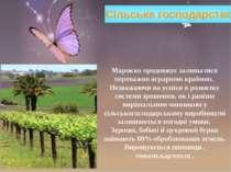 Сільське господарство Марокко продовжує залишатися переважно аграрною країною...