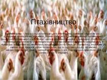 Птахівництво Птахівни цтво— галузь сільськогосподарського виробництва, основ...