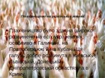 Птахівництво на українських землях Птахівництво було здавна широко розвинене ...