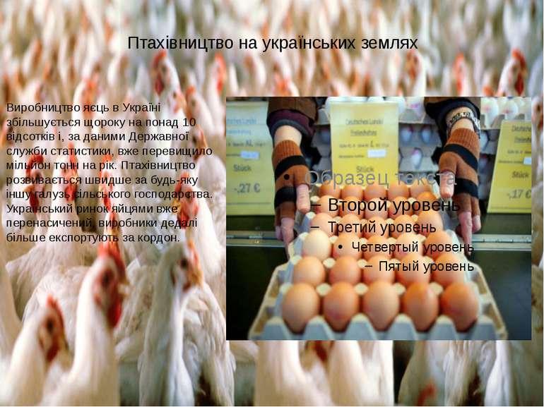 Птахівництво на українських землях Виробництво яєць в Україні збільшується що...