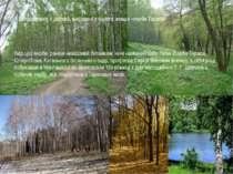 У дендропарку є дерева, вирощені з одного живця «верби Тараса» Вид цієї верби...