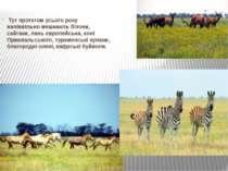 Тут протягом усього року напіввільно мешкають бізони, сайгаки, лань європейсь...