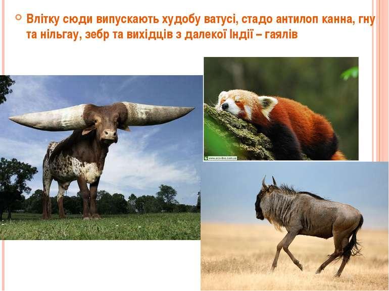 Влітку сюди випускають худобу ватусі, стадо антилоп канна, гну та нільгау, зе...