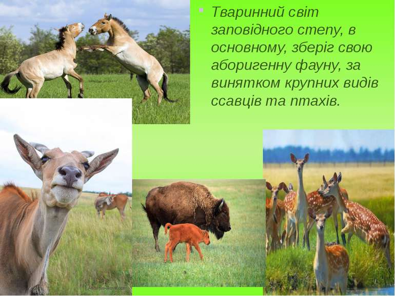 Тваринний світ заповідного степу, в основному, зберіг свою аборигенну фауну, ...
