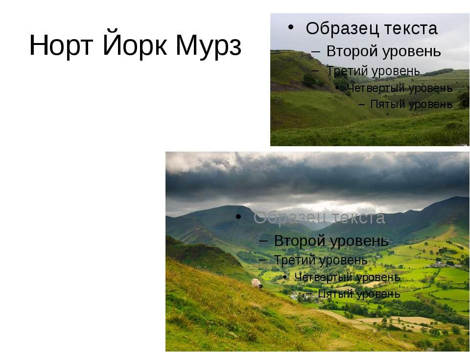 Норт Йорк Мурз