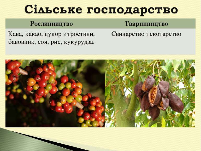 Рослинництво Тваринництво Кава, какао, цукор з тростини, бавовник, соя, рис, ...