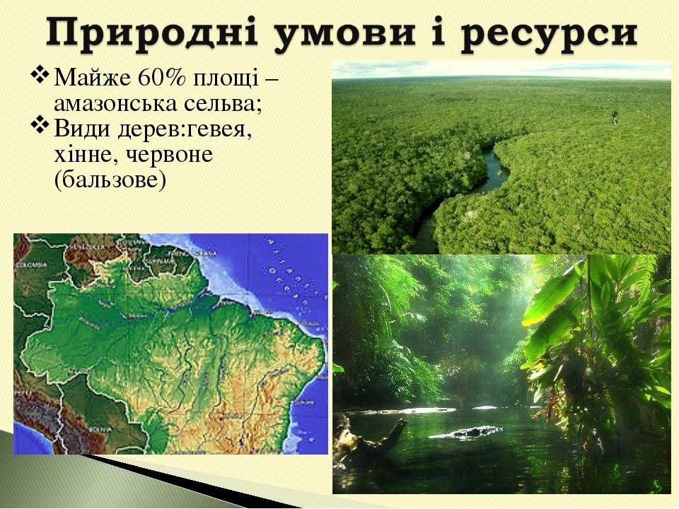 Майже 60% площі – амазонська сельва; Види дерев:гевея, хінне, червоне (бальзове)