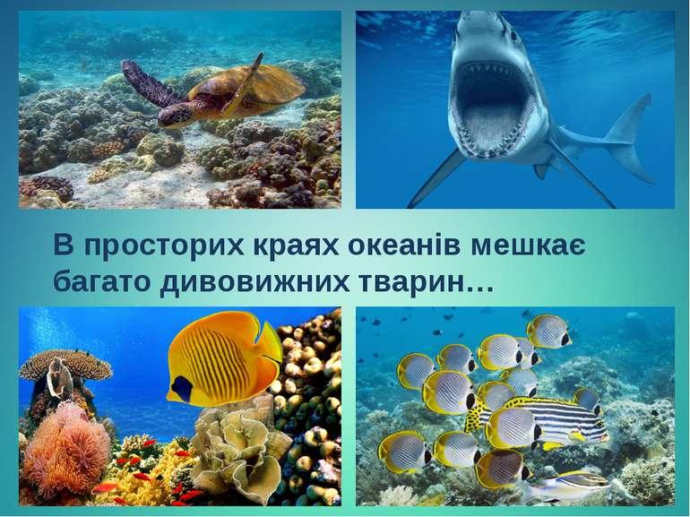 В просторих краях океанів мешкає багато дивовижних тварин…