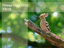 Птица года 2012: УДОД