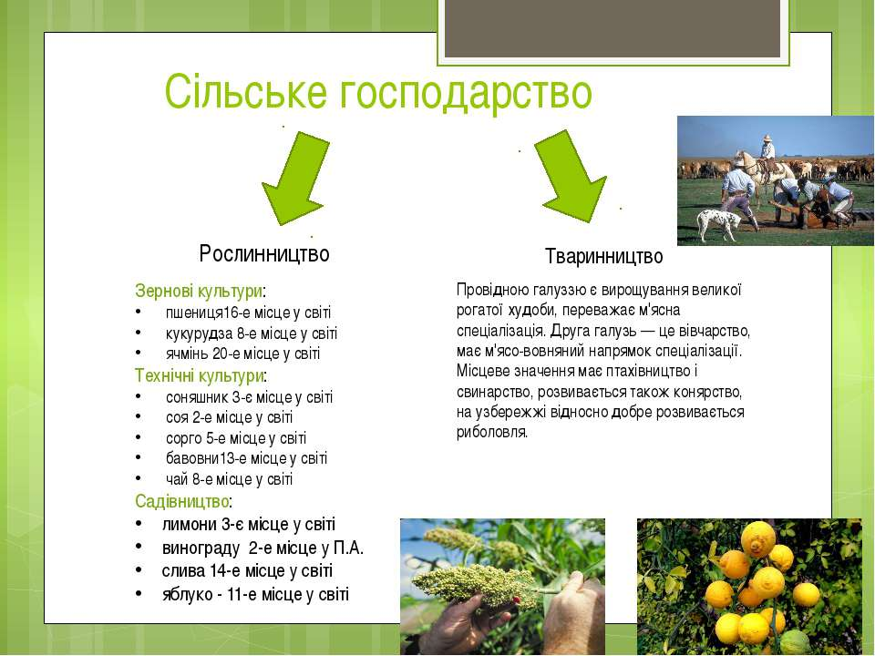 Сільське господарство Рослинництво Тваринництво Зернові культури: пшениця16-е...