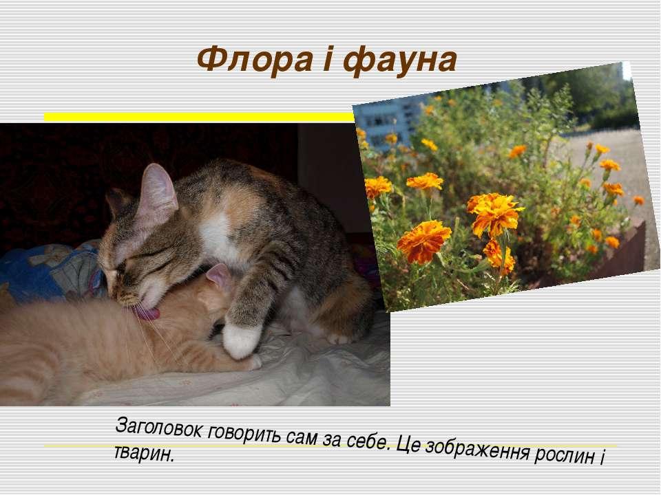 Флора і фауна Заголовок говорить сам за себе. Це зображення рослин і тварин.