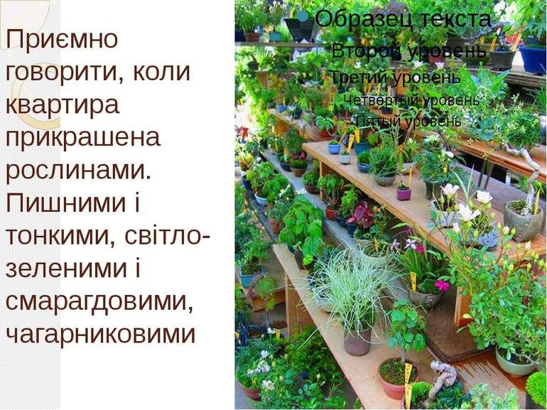 Приємно говорити, коли квартира прикрашена рослинами. Пишними і тонкими, світ...