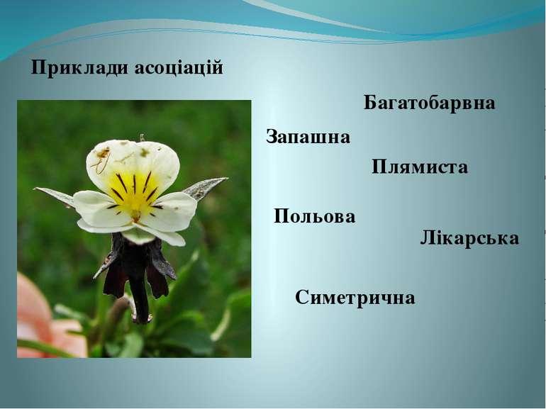 Приклади асоціацій Багатобарвна Запашна Плямиста Польова Симетрична Лікарська